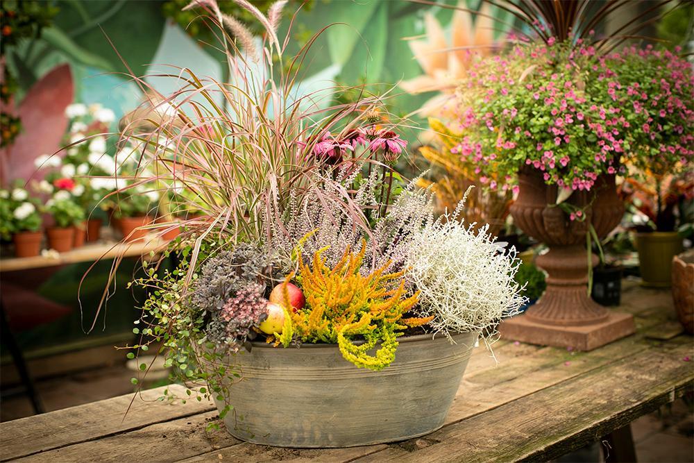 Växter för runt 800 kr och zinkbaljan kostar 349 kr. Spade från Kent & Stowe.