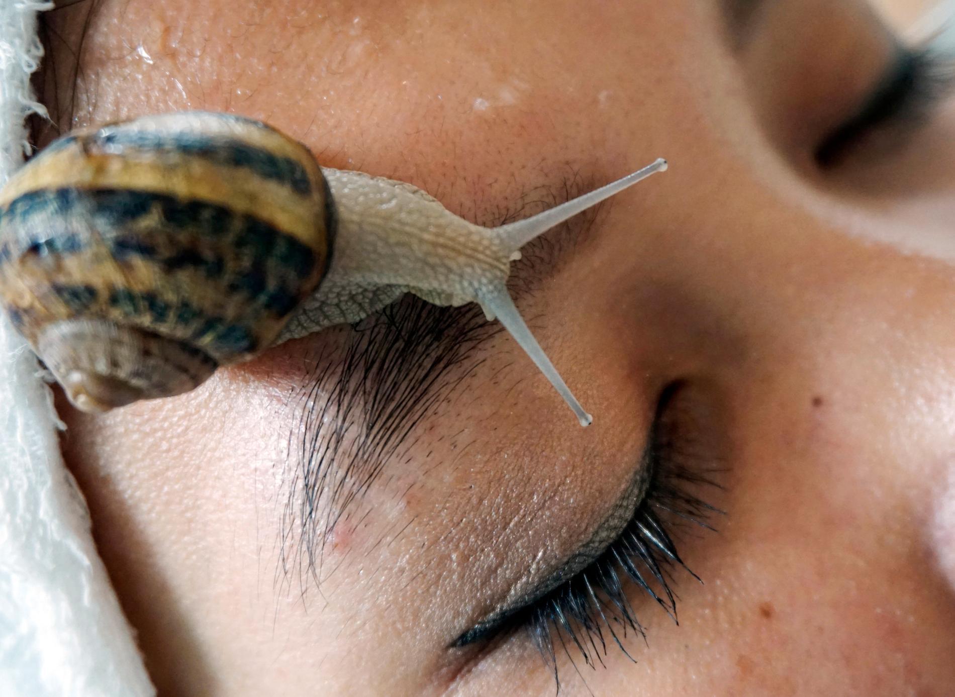 Snigelslem i ansiktet ger huden extra lyster, enligt en koreansk hudvårdstrend. Arkivbild.