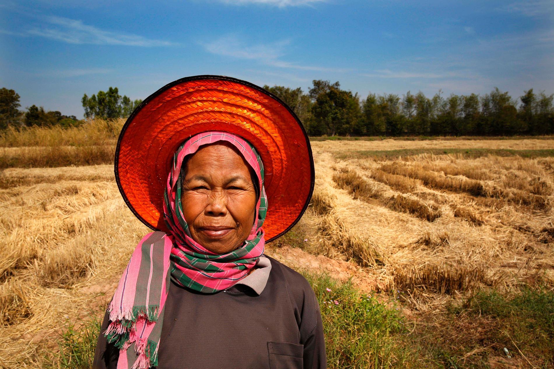 Risbonden Jumnong Sudnongbua vid sitt fält i byn Kambon i nordöstra Thailand. I området finns många småskaliga jordbruk – viktiga för matförsörjningen i regionen. Arkivbild.