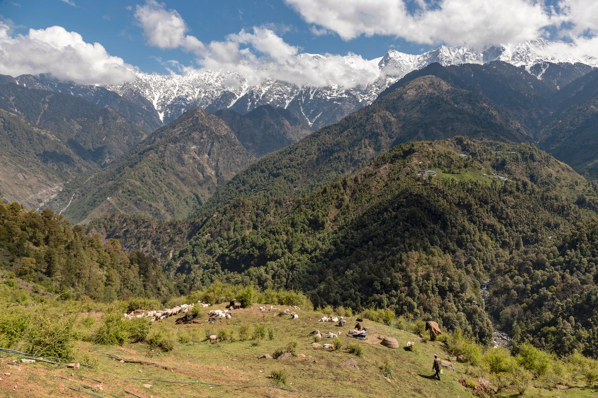 Vy från delstaten Himachal Pradesh där olyckan inträffade. Arkivbild.