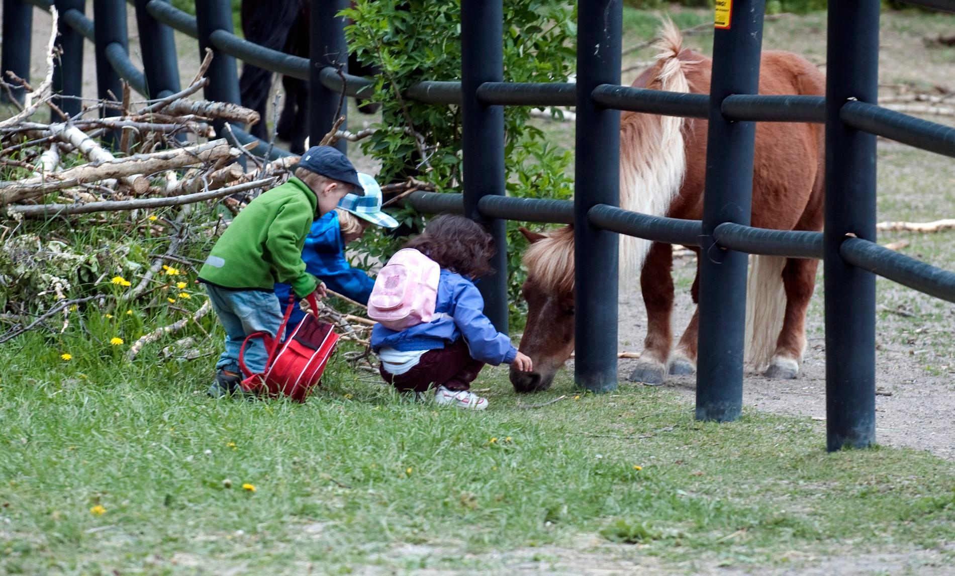 Barn hälsar på hästar i hage.