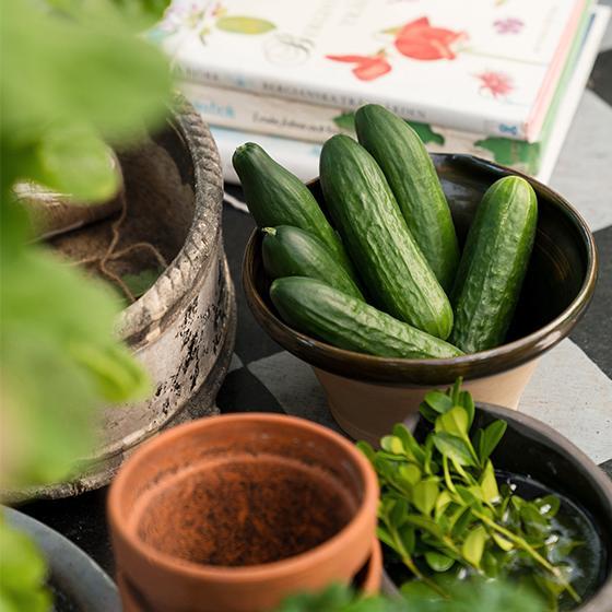 Växthuset ger en lång odlingssäsong för både grönsaker och kryddväxter.