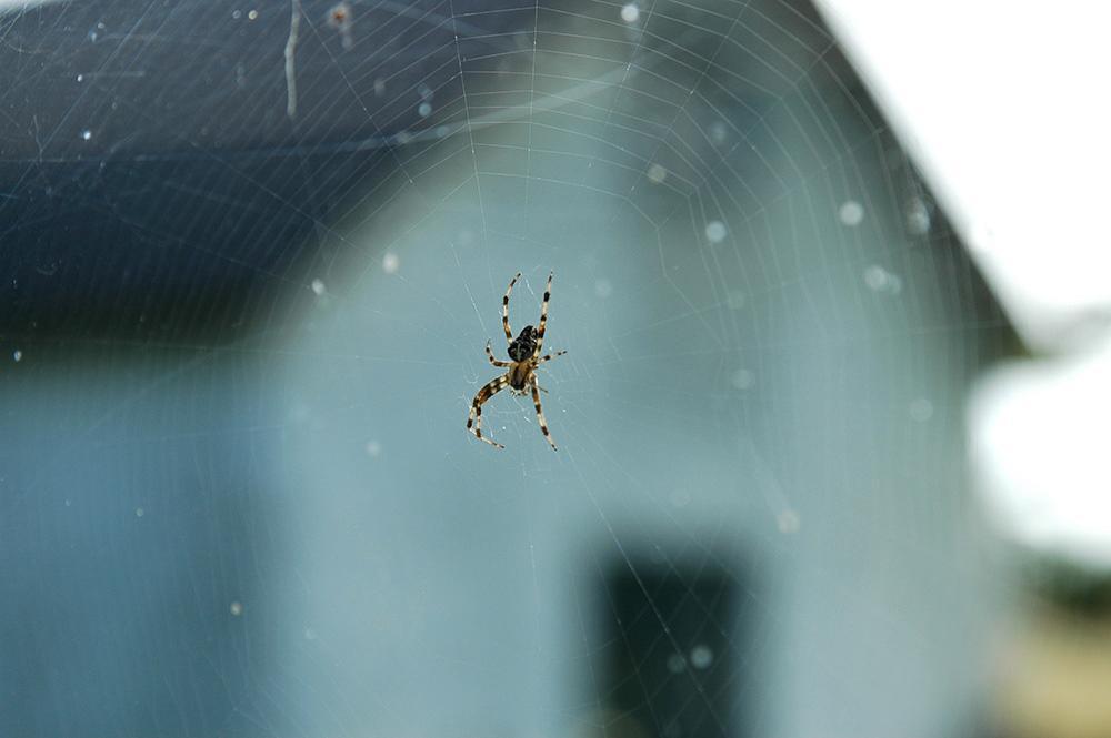 Bli av med spindlarna