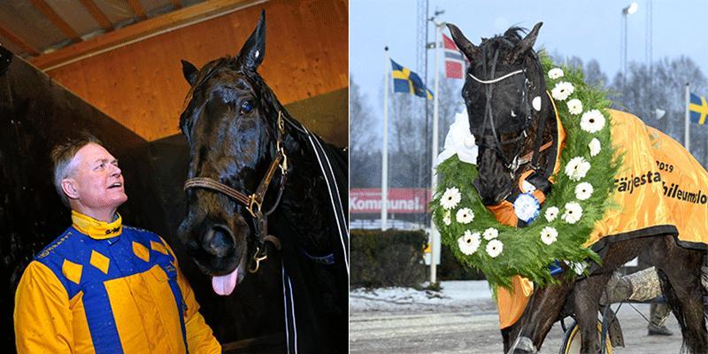 Det är tydligt att Hans R Strömberg tänker mycket på när det är dags att sluta tävla för dalahästen On Track Piraten.