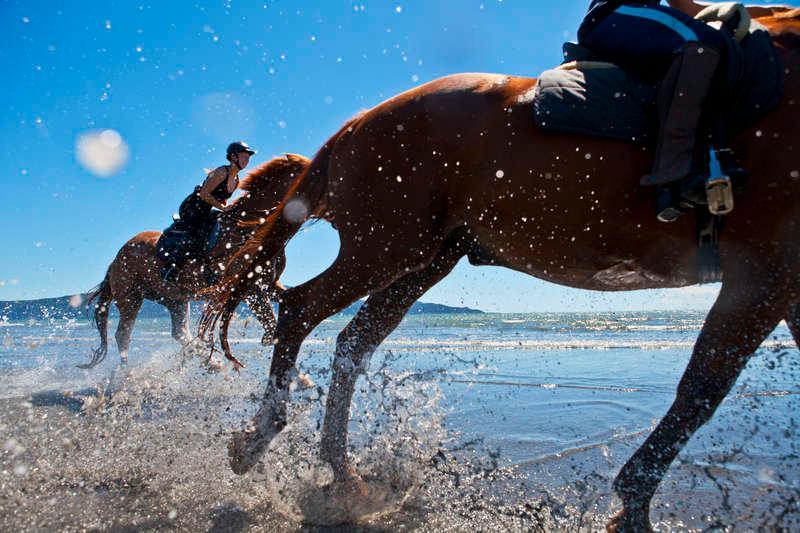 Enskild väg full med hästbajs? Då är det bara för ryttaren att plocka upp.