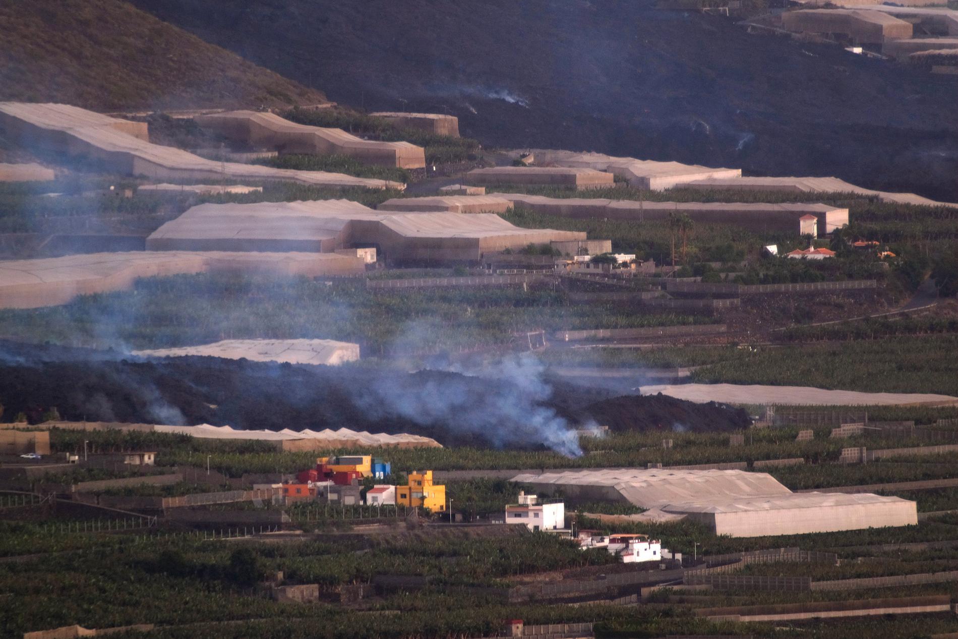 Lava från vulkanen förstörde en bananplantering på La Palma under onsdagen då ett nytt lavaflöde strömmade fram.
