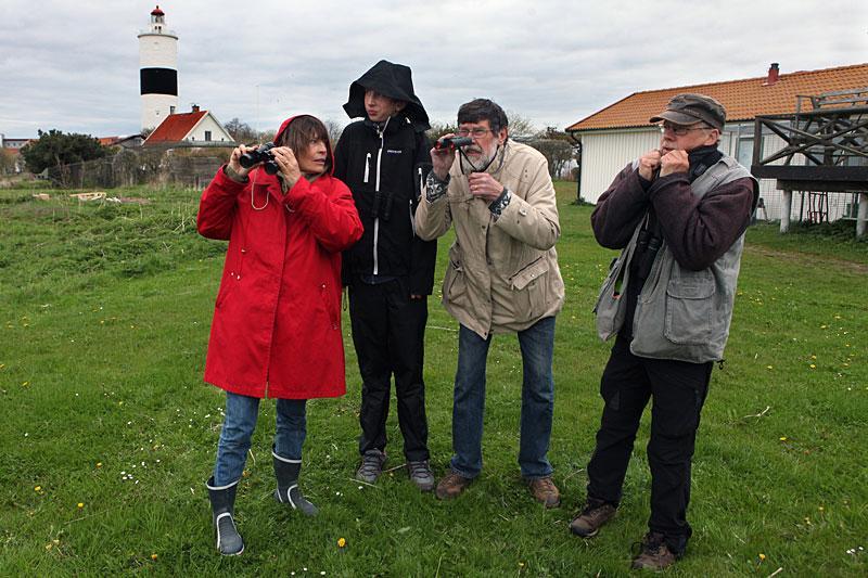 Birgitta, Petter och Bo Weimer är på fågelexpedition i fyra plusgrader på Öland tillsammans med guiden Göran Andersson.
