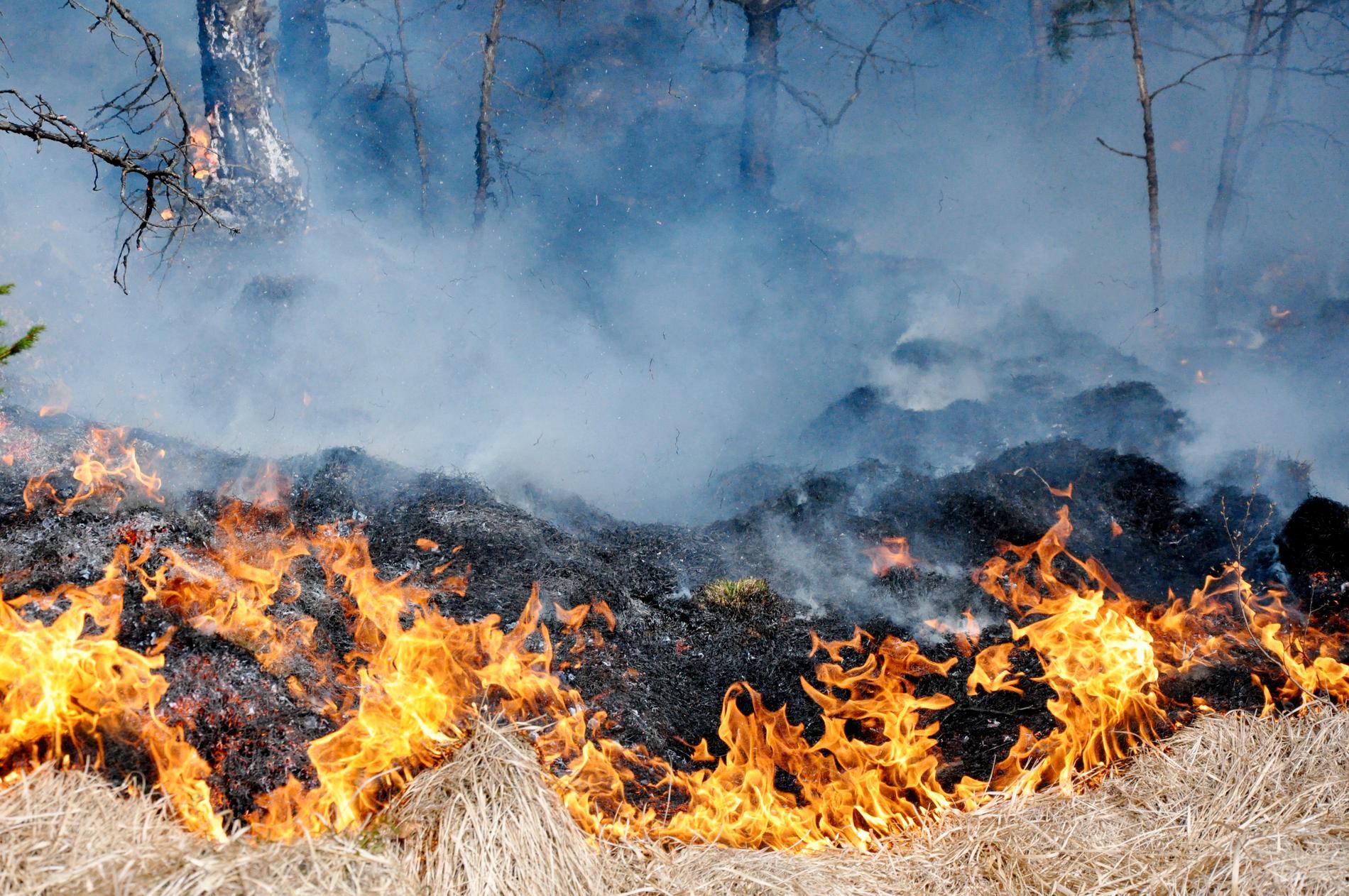 En kvinna döms för att ha orsakat en brand under rådande eldningsförbud. Arkivbild.