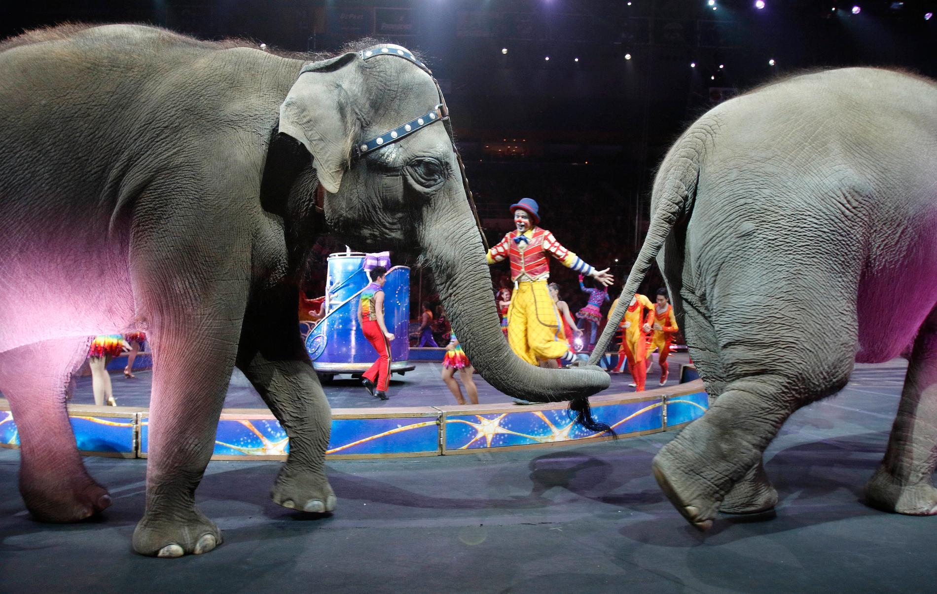 Inga mer elefanter på svenska cirkusar.