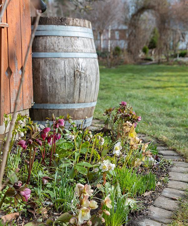 En ständig blomning och nötta bruksföremål. Ann-Sofie har lyckats skapa sina drömmars trädgård.