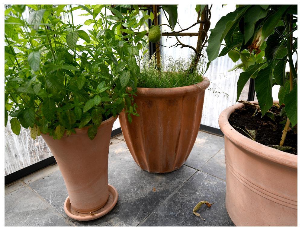 Odla i krukor så är det lättare att sköta om växthuset.