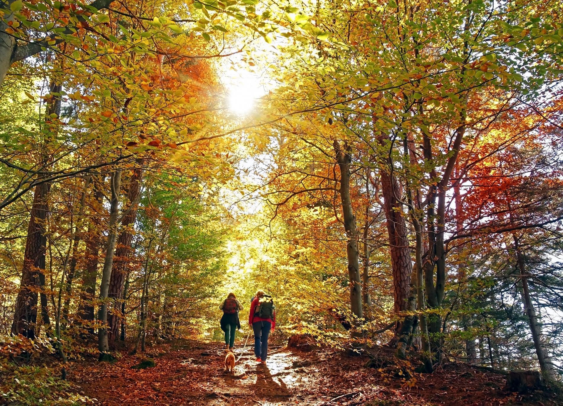 Att vandra på hösten kan vara vackert.