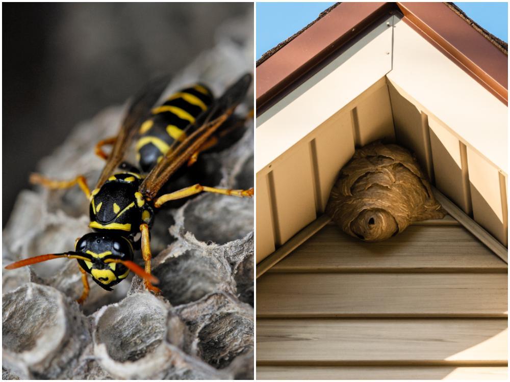Getingbon är vanliga uppe vid takfoten, taknocken och andra ställen där bot är lite skyddat.