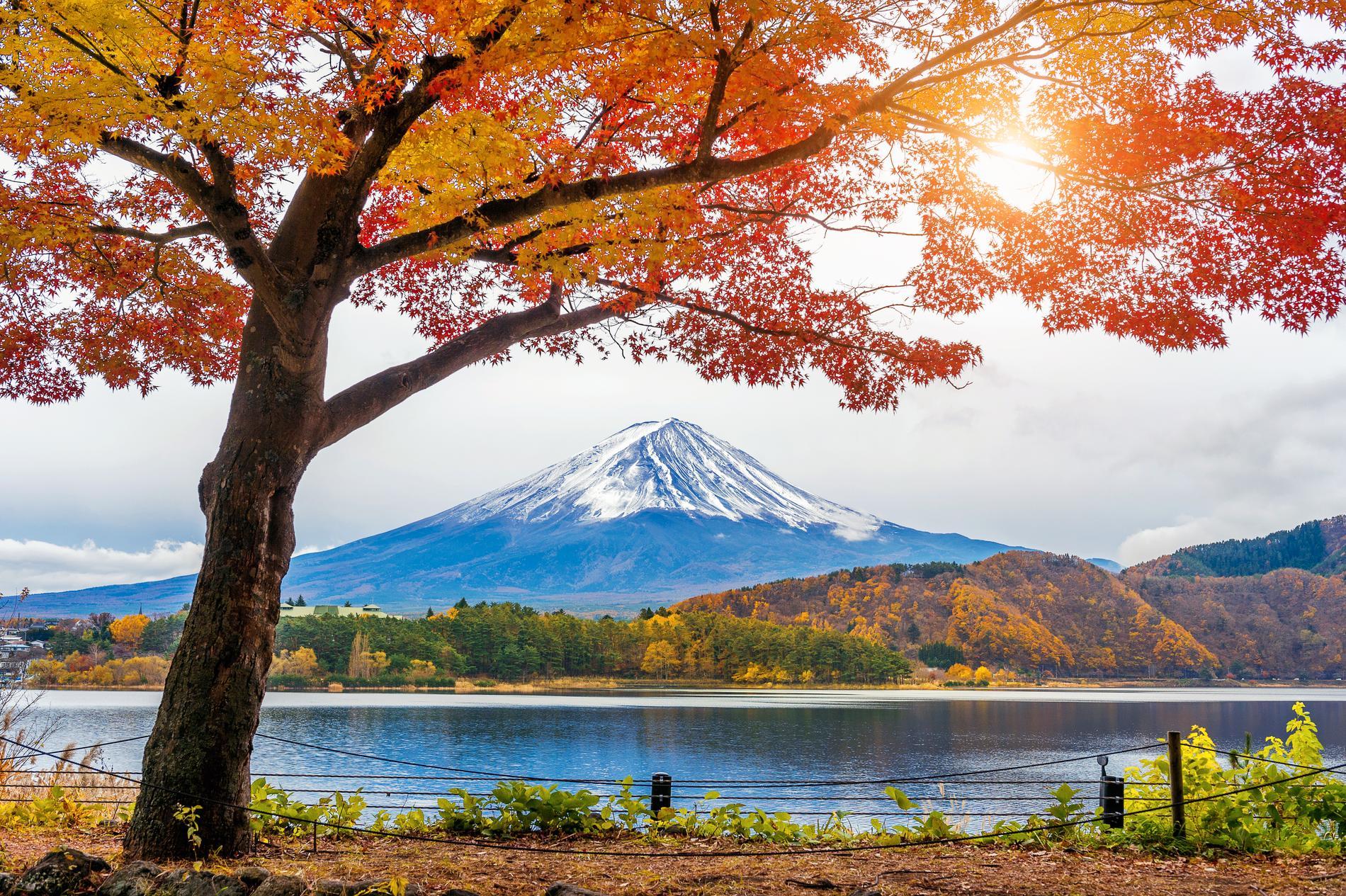 Fuji är omgiven av en nationalpark med vacker natur.