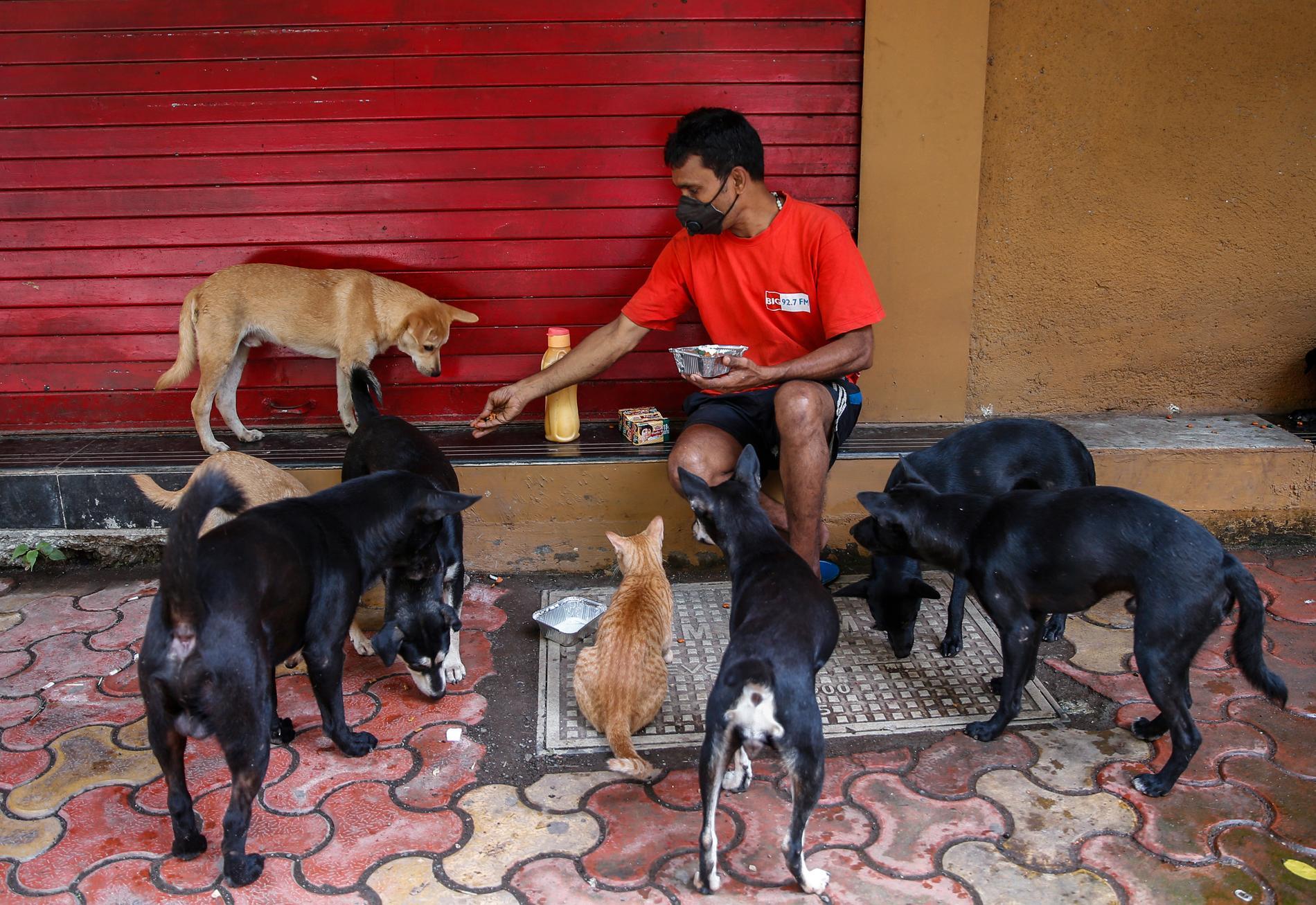 En man matar några av Indiens omkring 60 miljoner hemlösa hundar i Mumbai. Arkivbild.