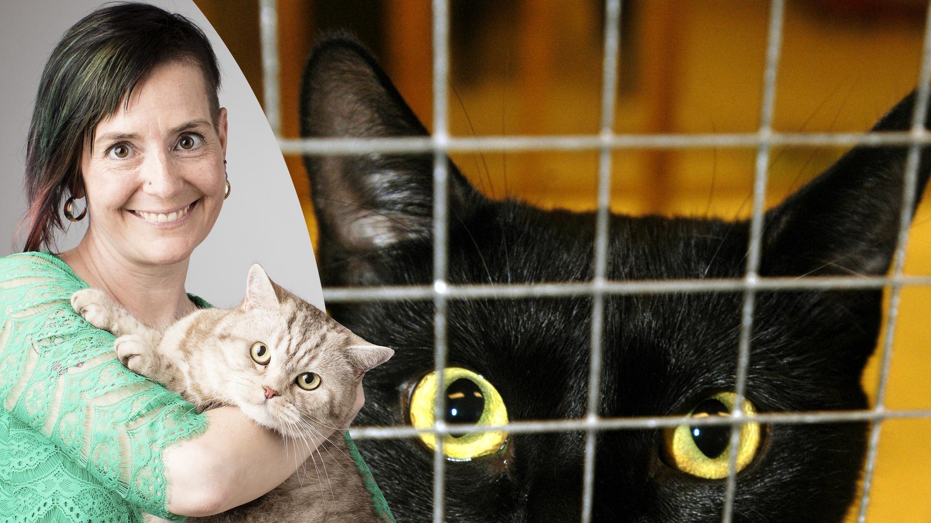 Katterna har ingen egen rösträtt, men vi som älskar dem har det. Låt det märkas, skriver Åsa Hagelstedt.