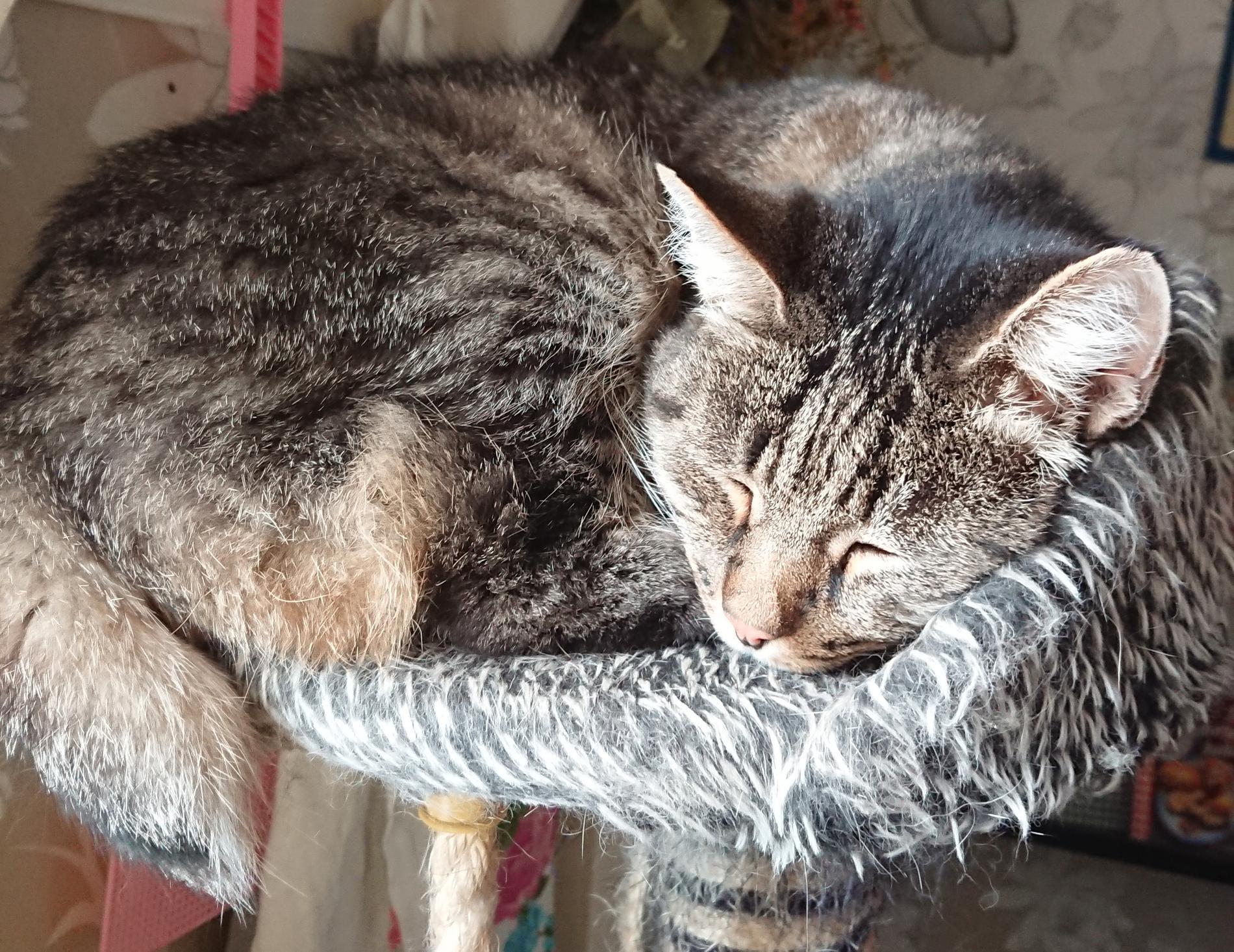 13-åriga Melvin är en social katt som älskar hundar.
