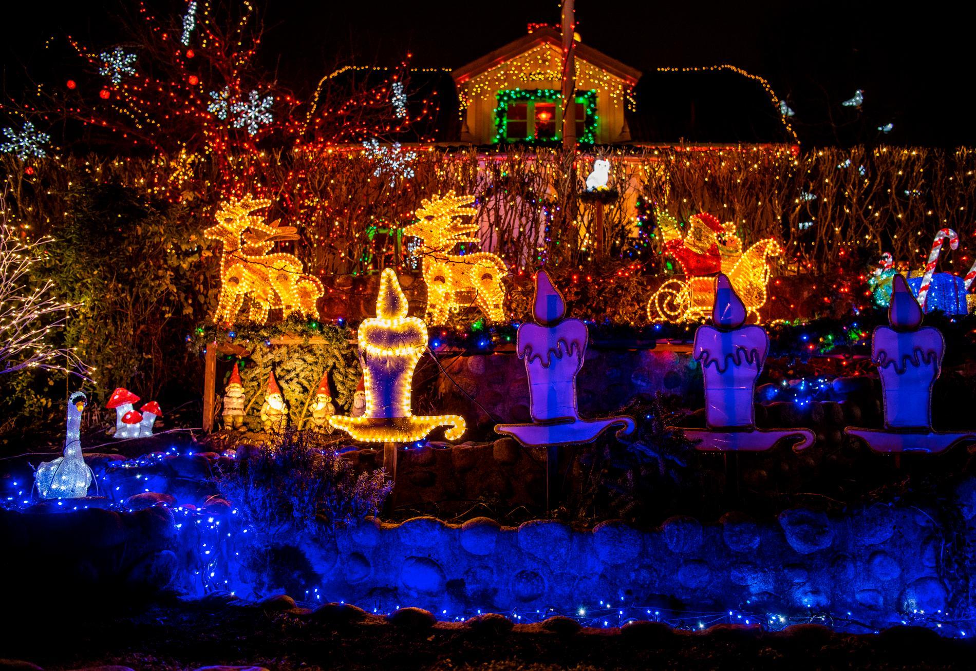 Bo Larssens trädgård med all julbelysning.
