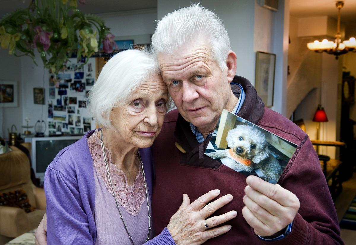"""""""HAN VAR PIGG"""" Dvärgpudeln Dallas togs hastigt i från Gwen Lundström och Gunnar Lindegren. De sörjer nu sin hund som dog nio år gammal."""