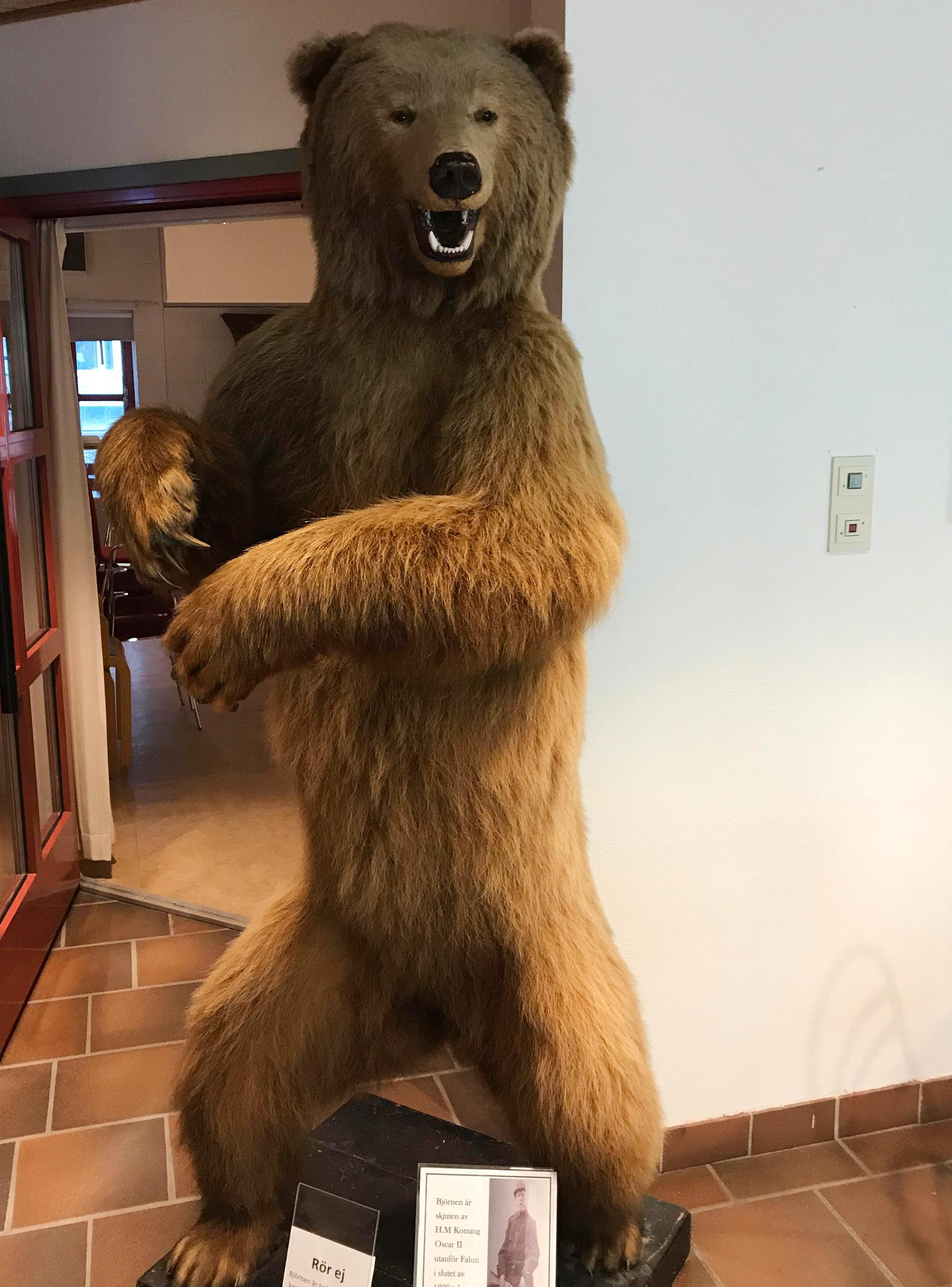 Den uppstoppade björnhonan väger mellan 50 och 70 kilo och är drygt två meter lång.