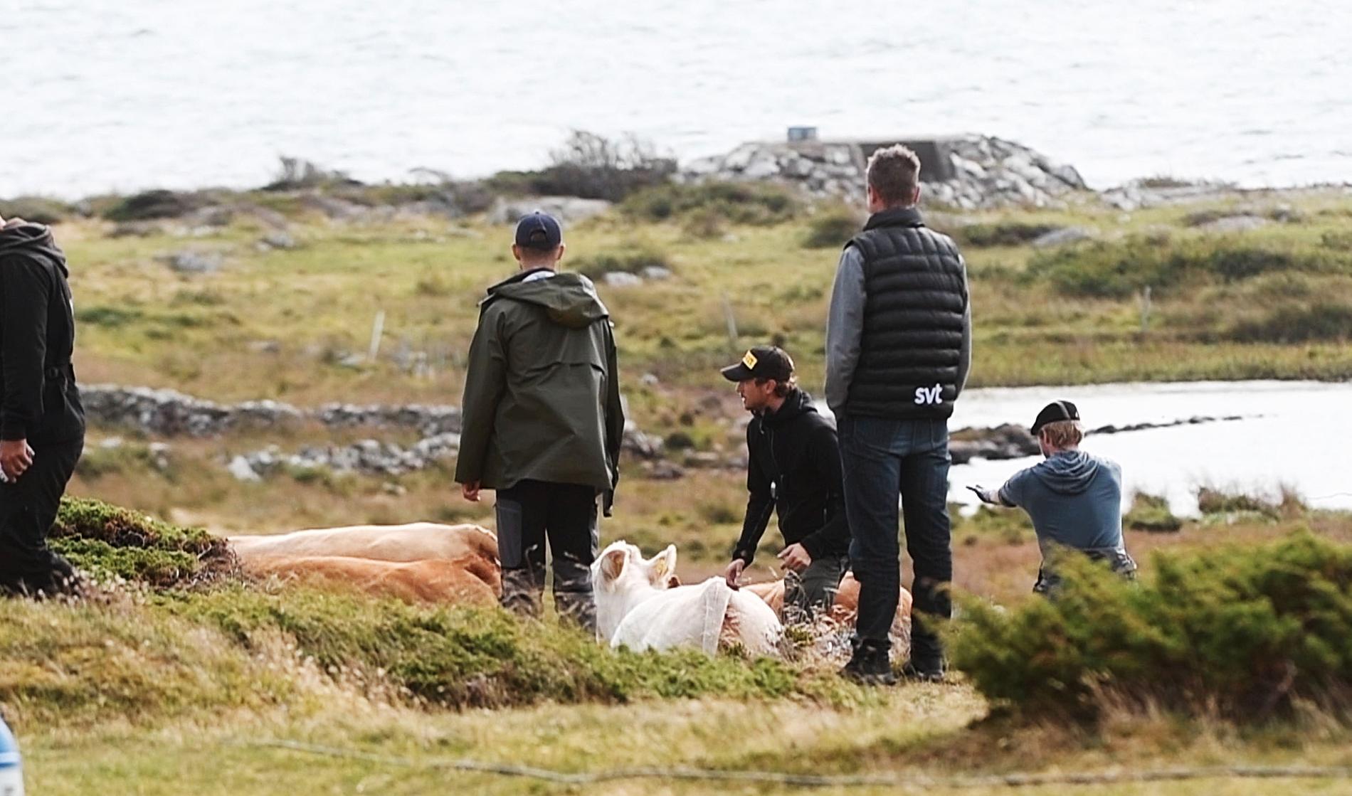 Tv-teamet tvingades mota bort koflocken som försökte sig på en tjurrusning mot den dyra utrustningen.