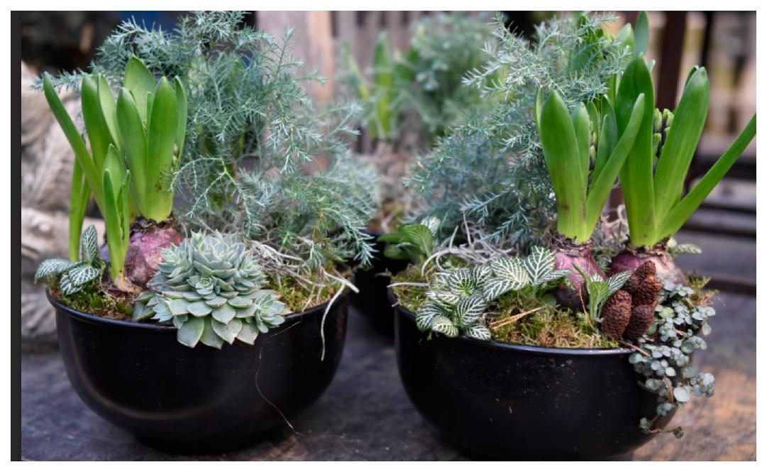 Tänk på kontrasterna när du väljer växter till julgruppen så blir det fint.