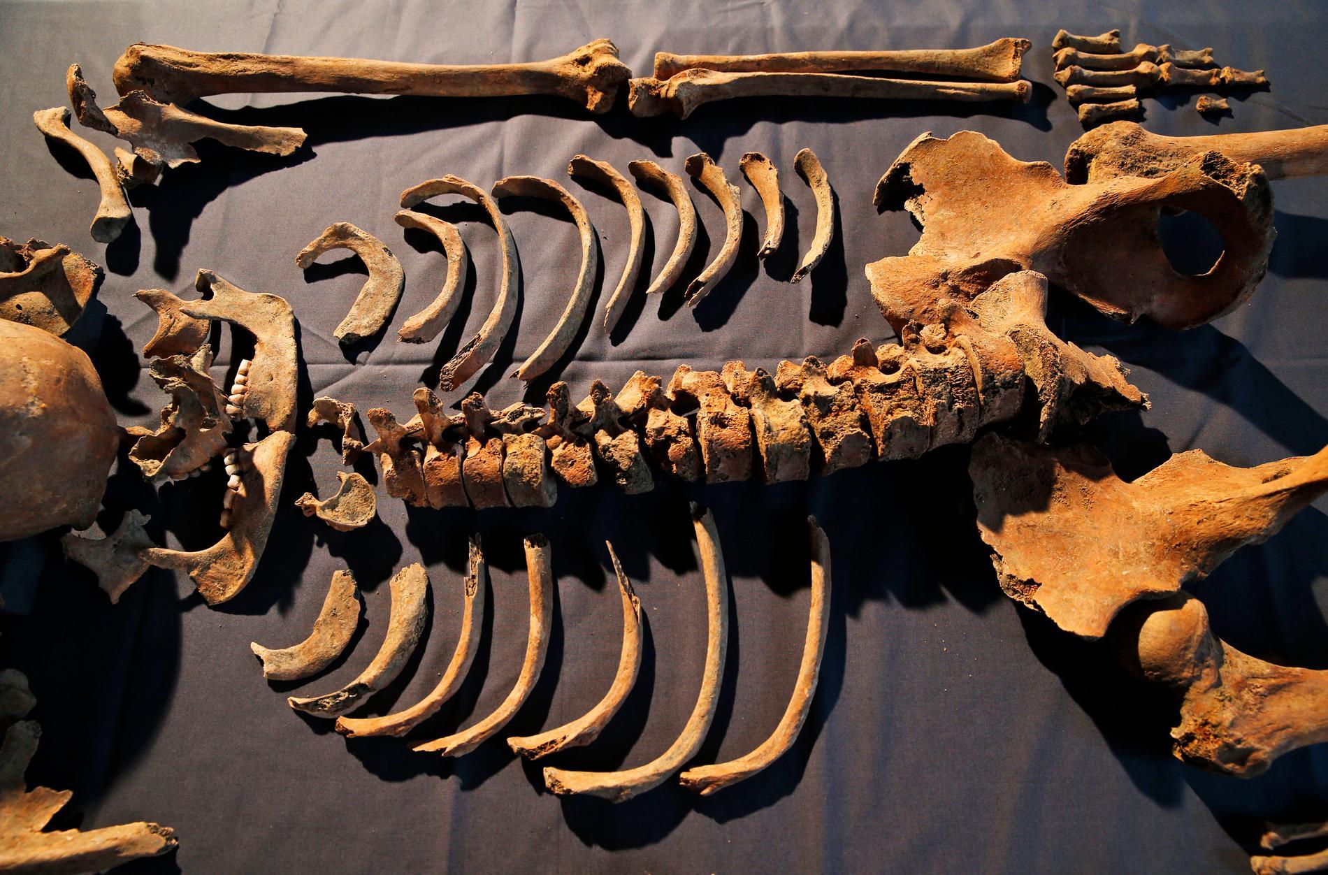 Kvarlevor av en person som avlidit i digerdöden i London på 1300-talet. Arkivbild.