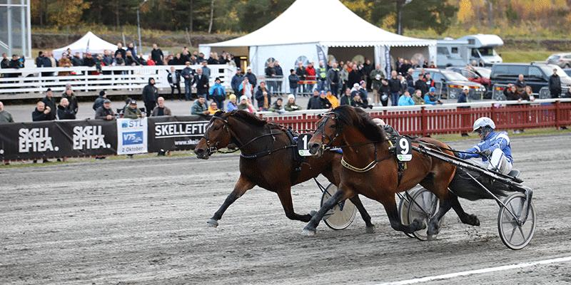 Tangen Haap, som ägs av hockeybröderna Sedin, blev senast på Skellefteå avslagen på mållinjen av Mats Djuse och Stjärnblomster.
