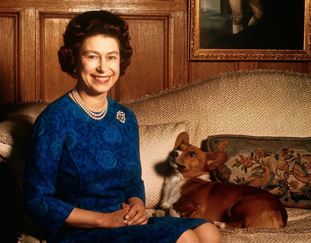 Drottning Elizabeths favorithundras är corgi och dorgi. Hon har själv fött upp sådana hundar.