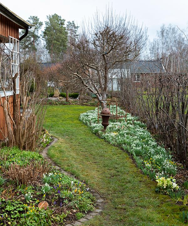 Den sticklingsförökade buxbomen ger lite grönska även åt vinterträdgården.