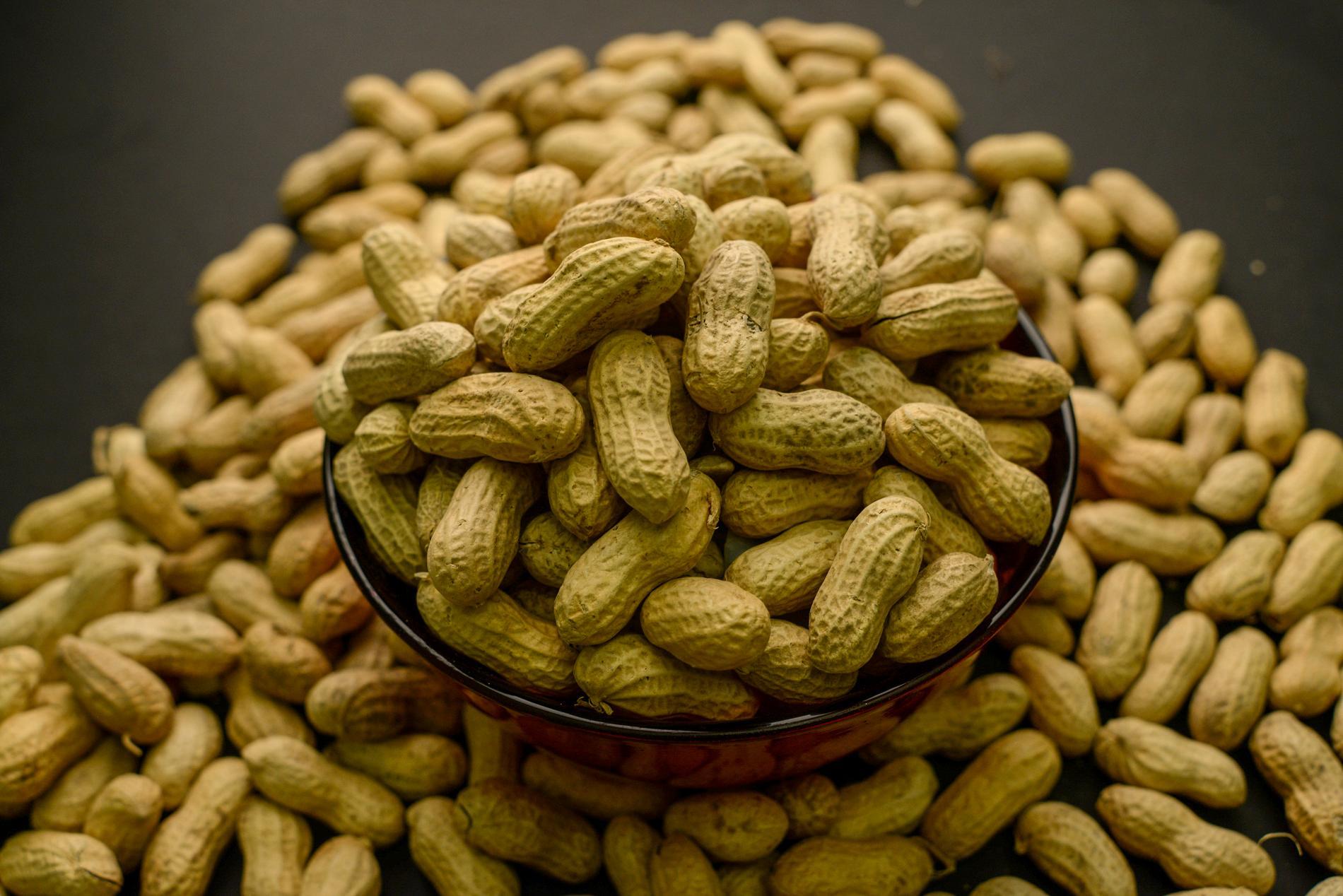 Aflatoxin är ett gift som produceras av mögelsvampar som kan växa på bland annat jordnötter. Arkivbild.