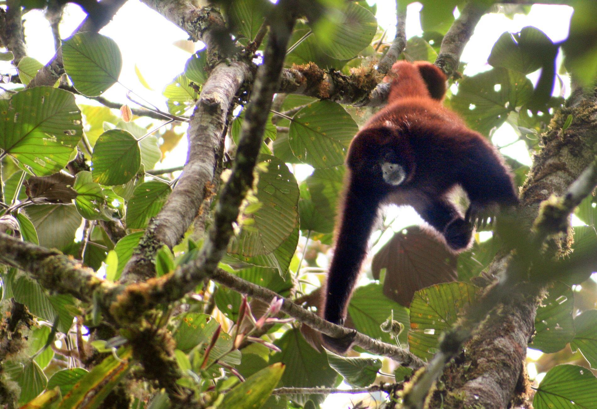 Om Amazonas regnskog torkar ut och brinner upp, ger det katastrofala konsekvenser.