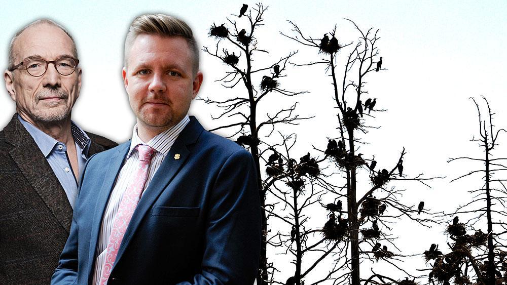 Öar där skarven bosätter sig dör och träd, vegetation och omkringliggande vatten förstörs, skriver EU-parlamentarikerna Fredrick Federley och Nils Torvalds.