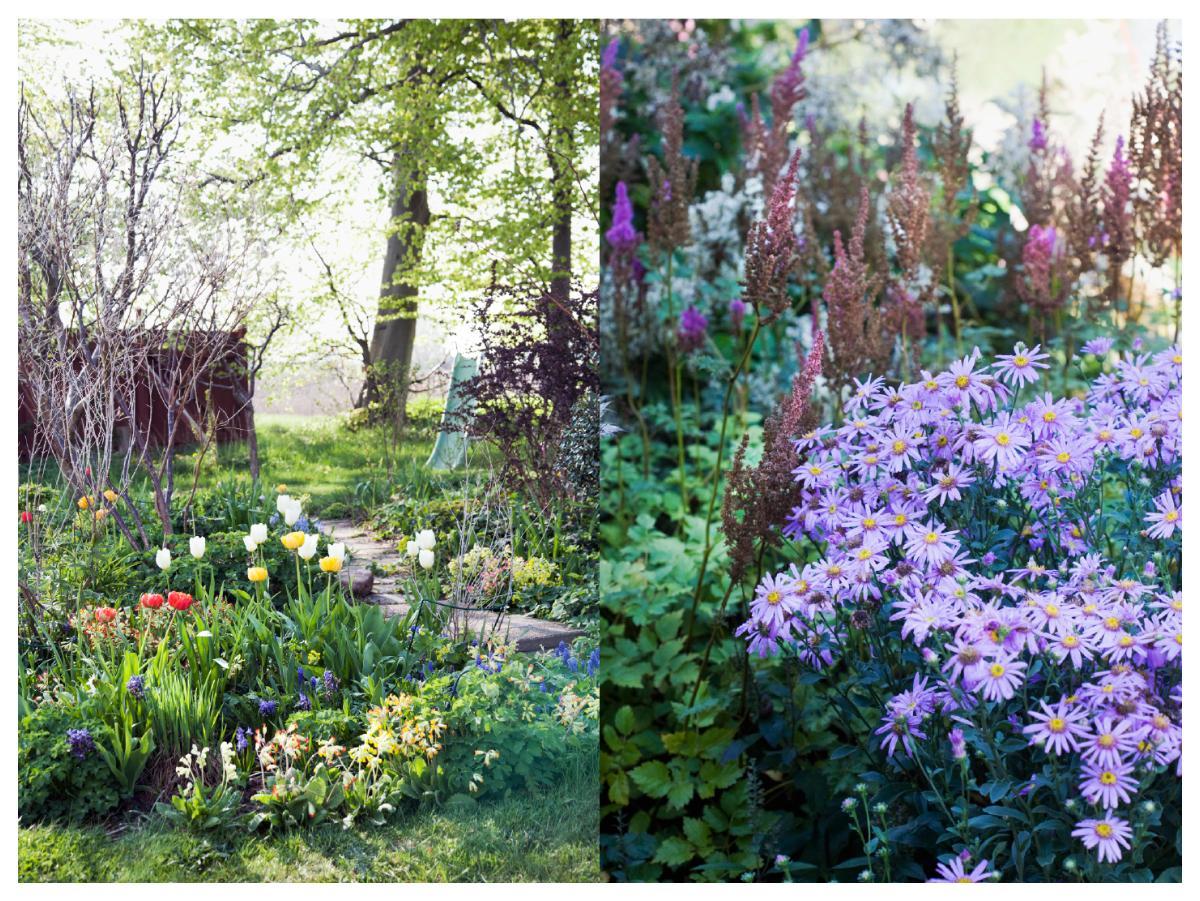 Tänk på att det är trevligt om det alltid är något som blommar i trädgården från vår till höst.