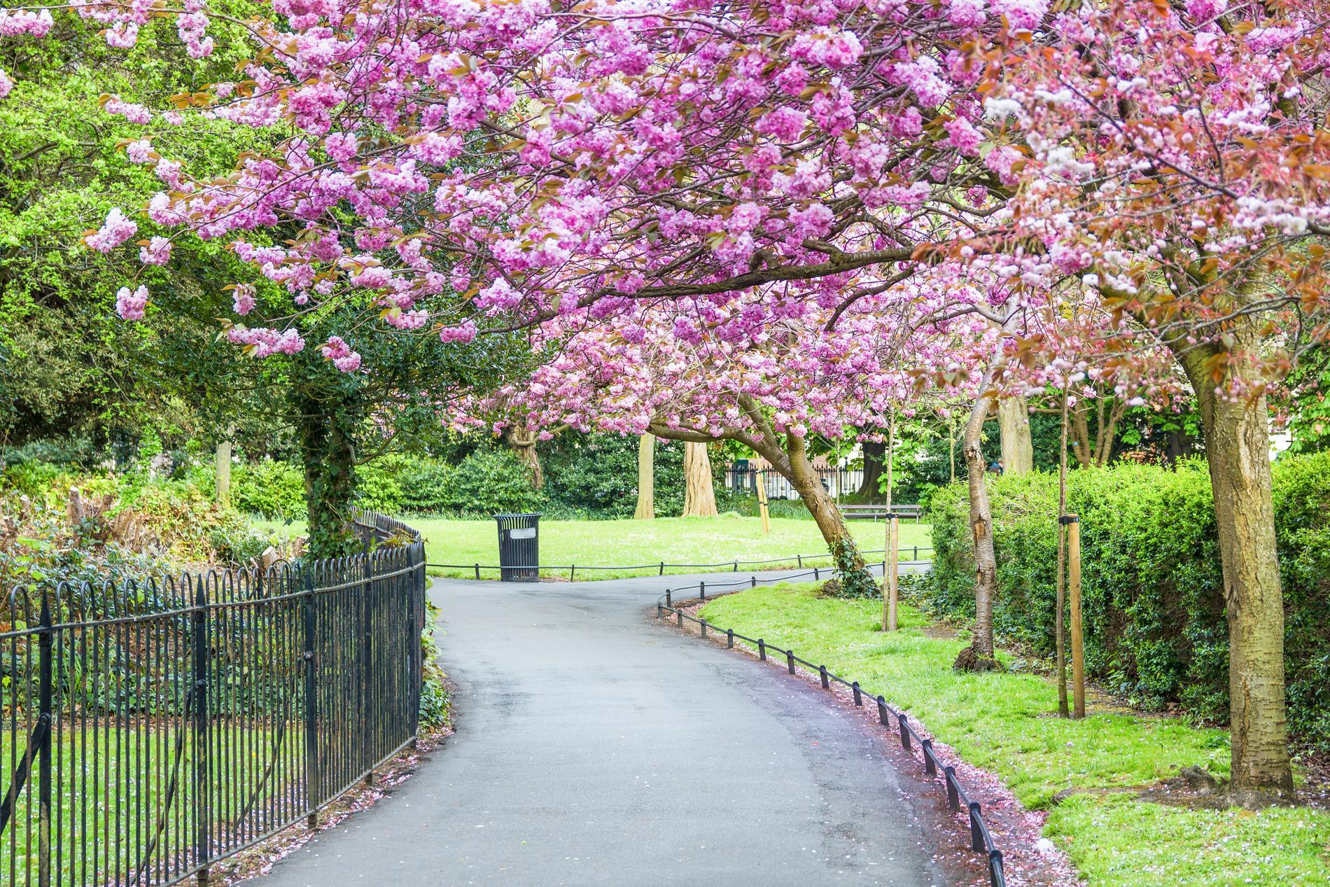 St. Stevens green är en härlig oas i Dublin.