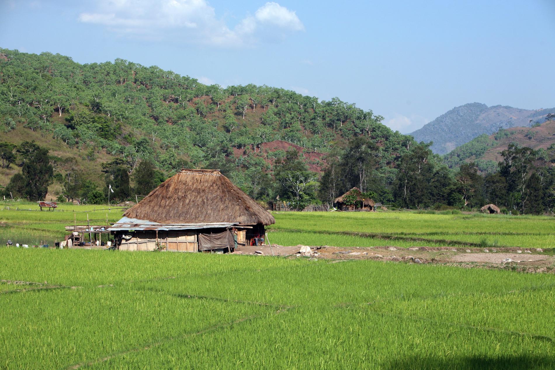 Många i Östtimor är självförsörjande.