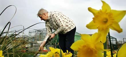 Nu är det dags att förverkliga trädgårdsdrömmen - ut och gräv!