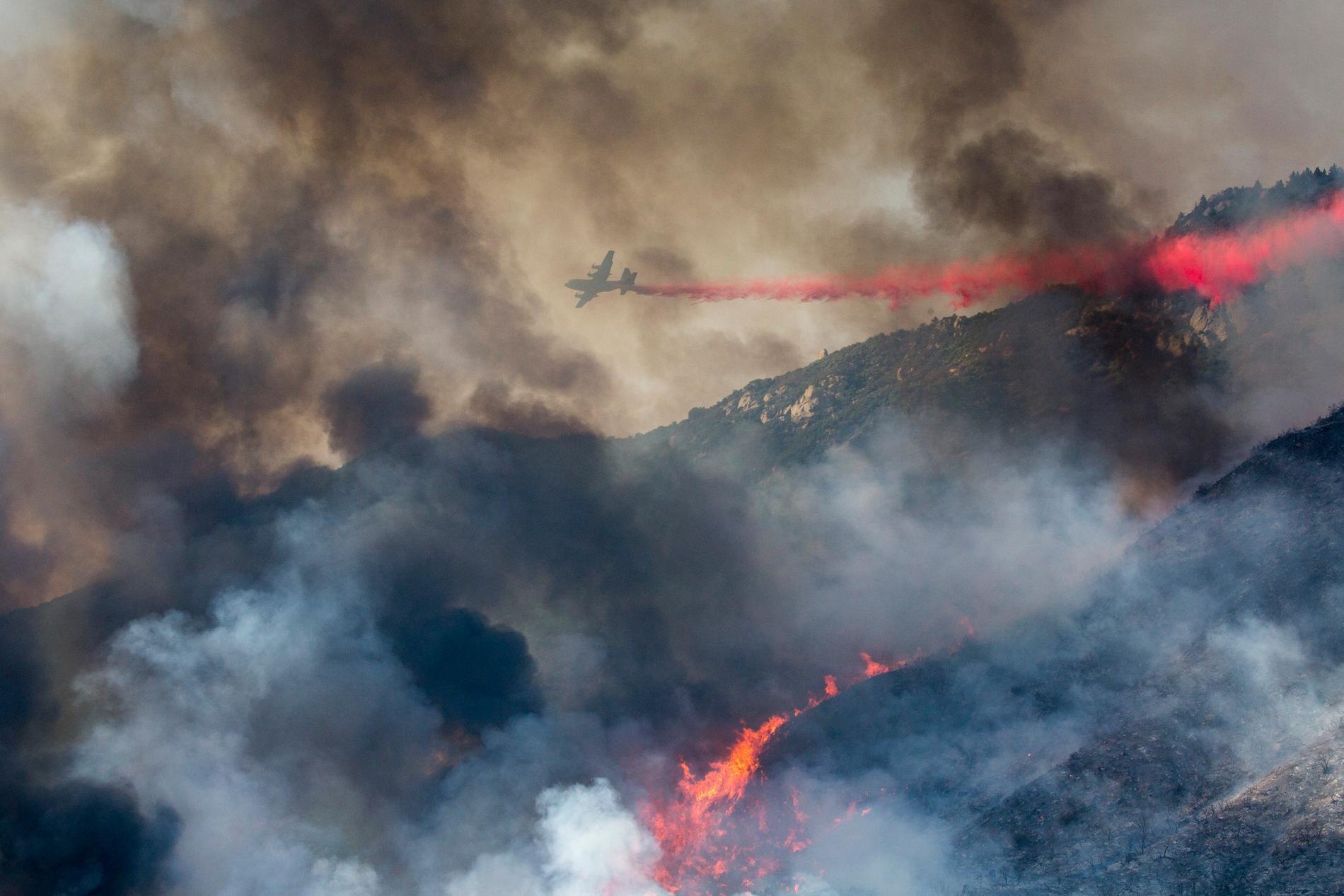 Skogsbränderna sprider sig snabbt.