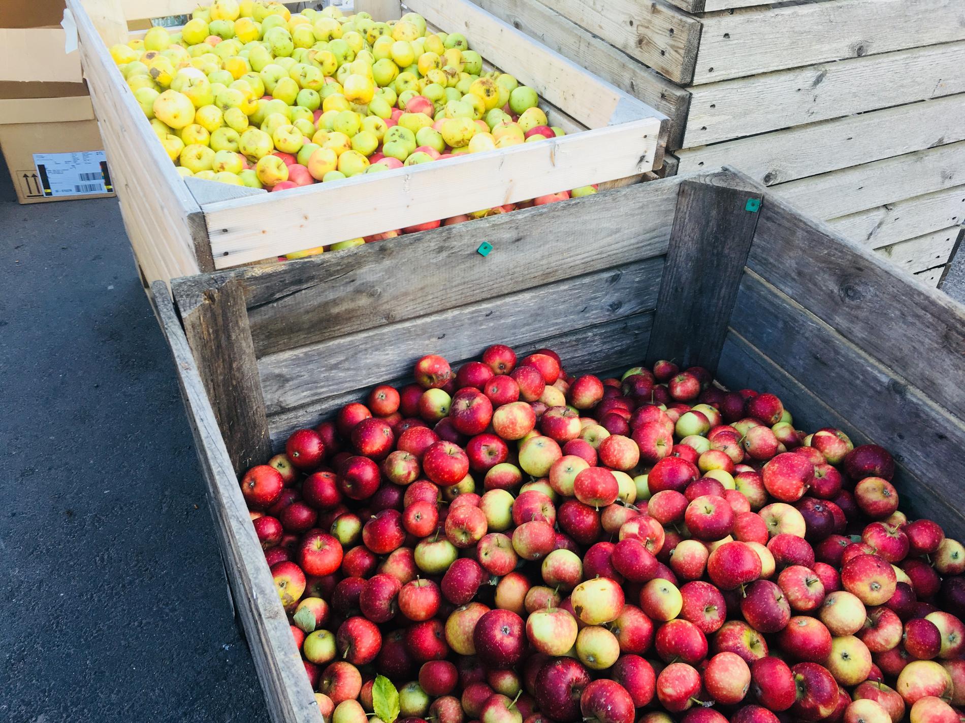Äppelmusteri.
