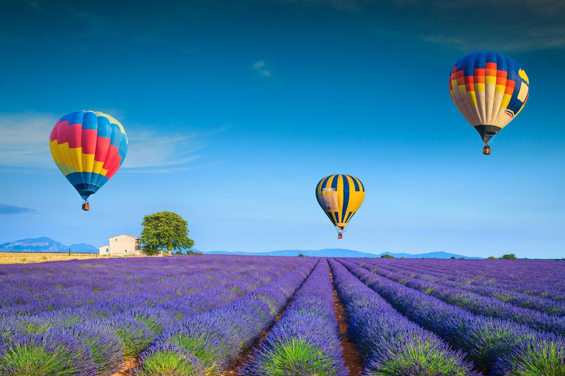 De lila lavendelfälten gör ballongturen i Provence extra häftig.