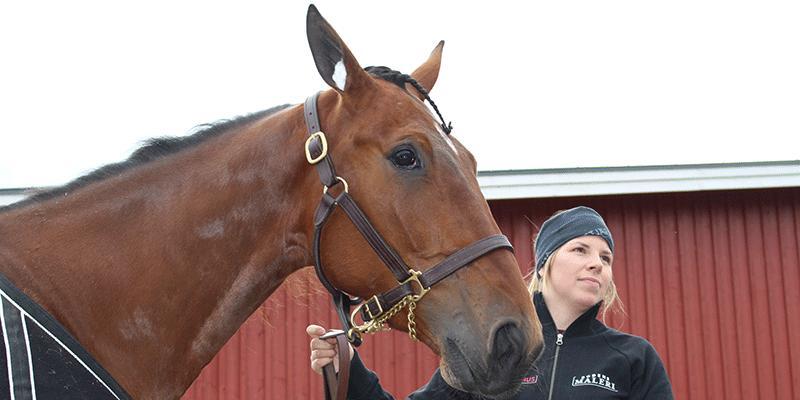 Swagger är försiktig hemma på gården men en helt annan häst när det vankas tävling.