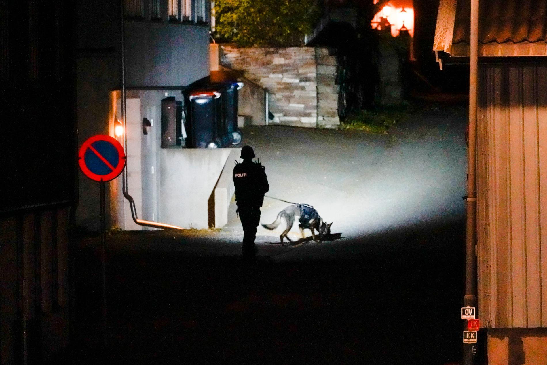 Polishund söker i området. Attackerna ska ha skett på flera platser i Kongsberg.