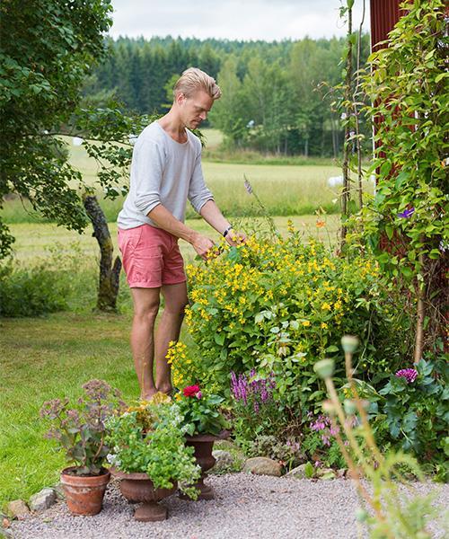 Sten, som är florist, har planterat mycket växter i rabatterna på framsidan av torpet. Här växer bland annat praktlysing, stäppsalvia, rosor och dahlia