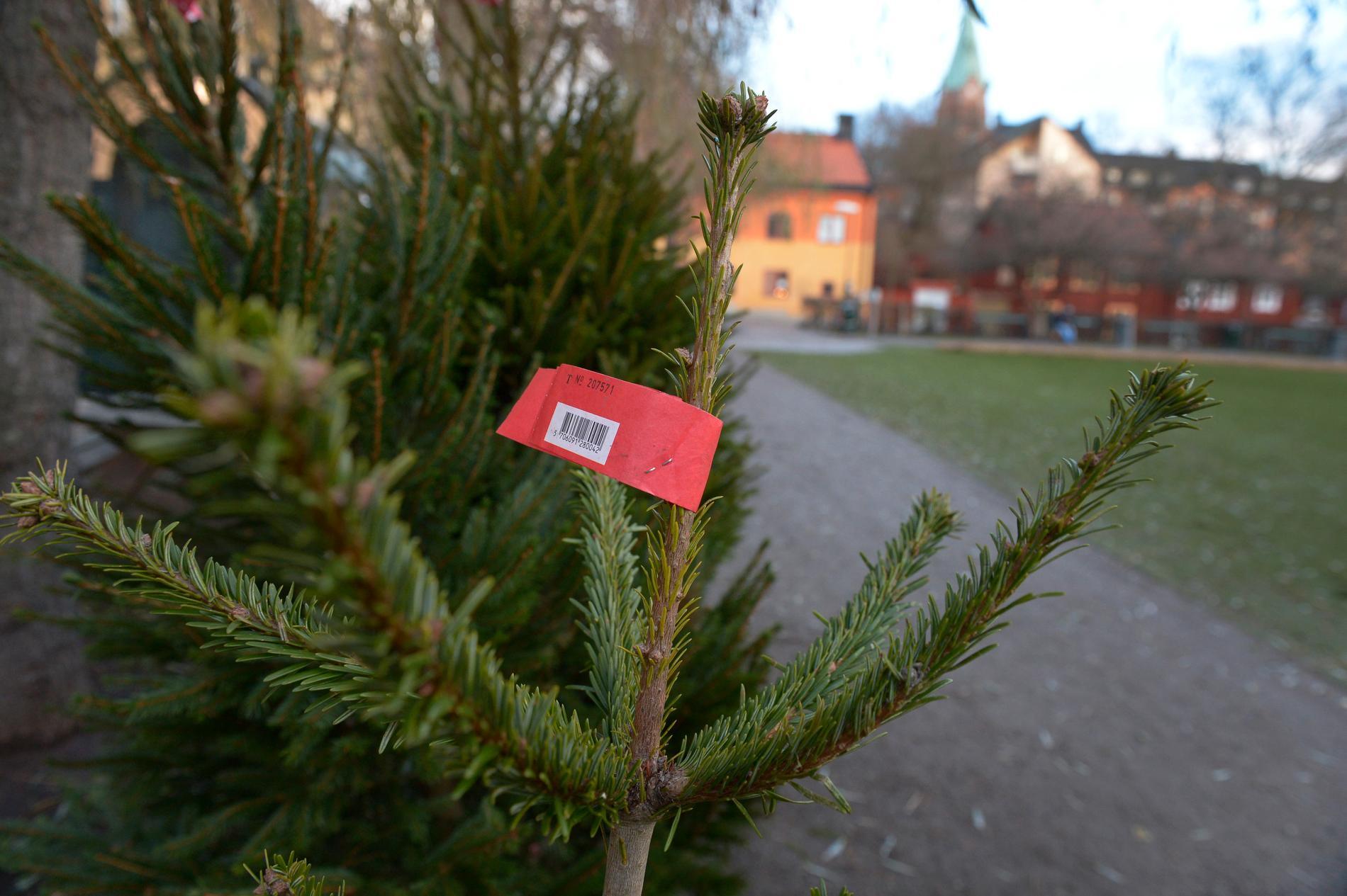 Julgransförsäljningen började tidigt i år.