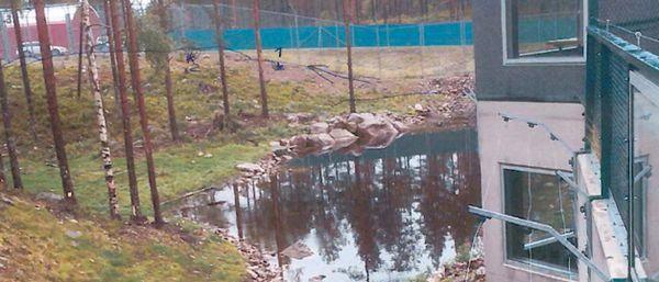 Robert Lindvall, 18, dödades av en brunbjörn i Orsa djurpark. Björnarna grävde in sig från ett angränsande hägn.