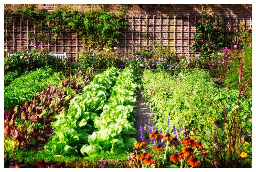 Grönsaker i rader, vi är många som drömmer om ett eget grönsaksland.