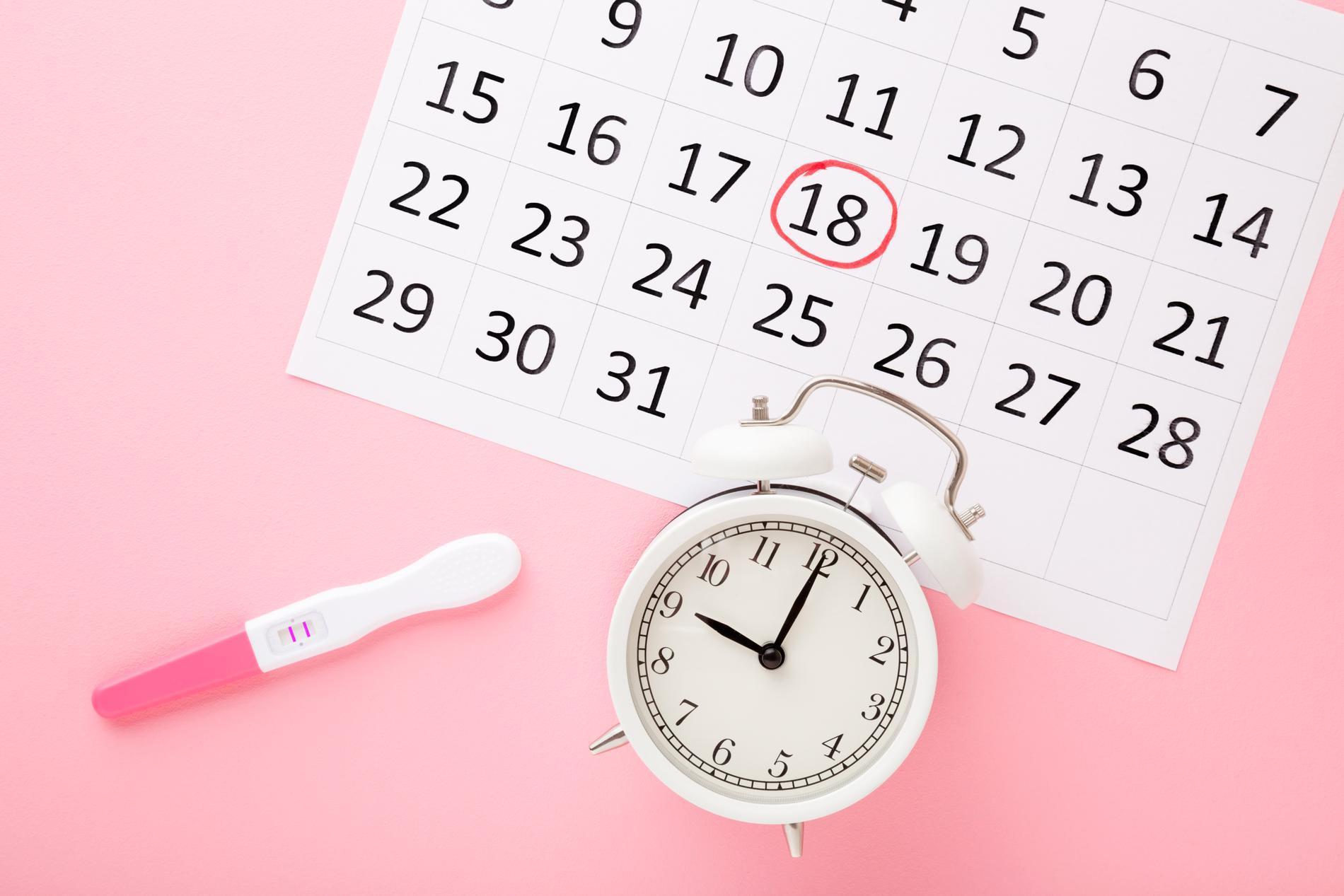 Kalender med inringat datum för ägglossning och ett ägglossningstest som visar positivt. Nu är chansen störst att bli gravid.