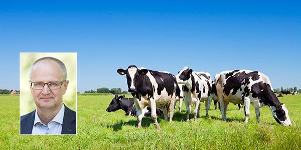 """Palle Borgström, LRF, menar att fler kor är en förutsättning för en bättre miljö: """"Utan landets 340 000 mjölkkor som ystra springer ut på 100 000 hektar betesmark hotas vår natur."""""""