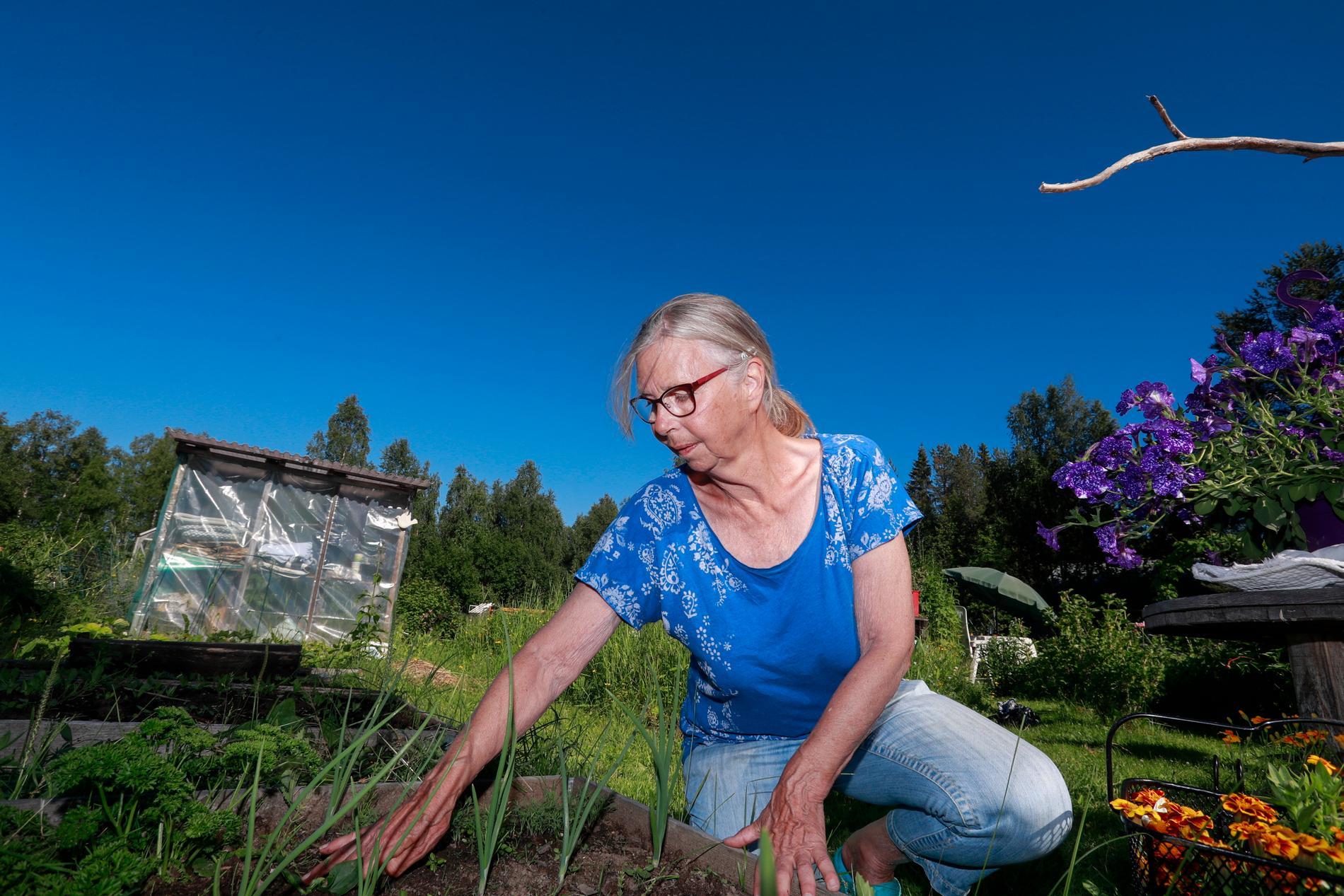 Karin Nelson, ordförande i odlingslottsföreningen Killingholm i Boden, har märkt av ett ökat tryck de senaste åren.