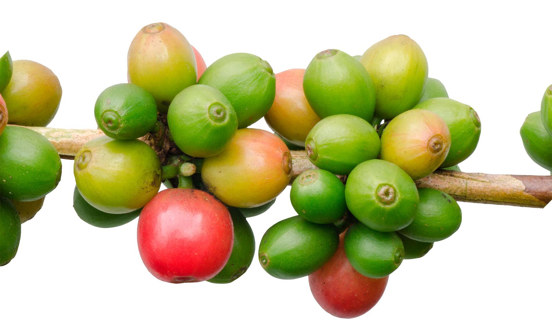 Fenoliska antioxidanter finns i olika former, och hittas bland annat i grönt te, fullkornsprodukter, citrusfrukter, gröna bladväxter, hallon, björnbär, blåbär, granatäpple och jordgubbar.